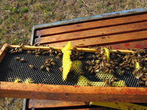 2009 August honeycomb brace
